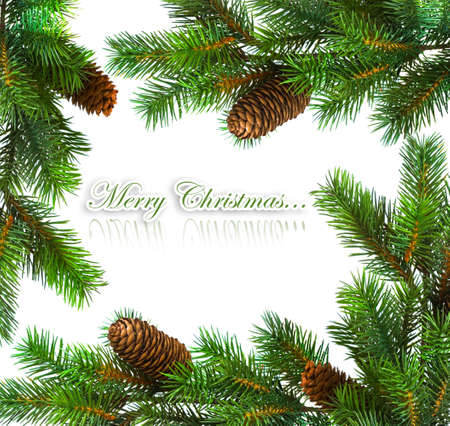 branch of Christmas tree on white Stock Photo - 5347851