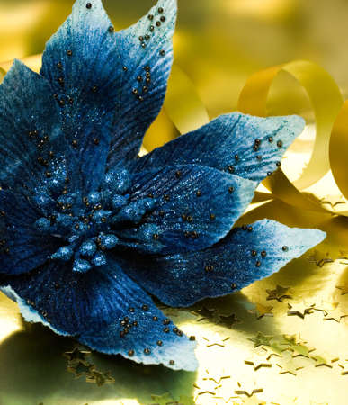 blue flower poinsettia on golden background  photo