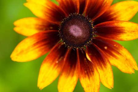 beautiful yellow flower on field Stock Photo - 5347957