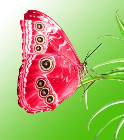 mariposa: hermosa mariposa en una hoja verde Foto de archivo