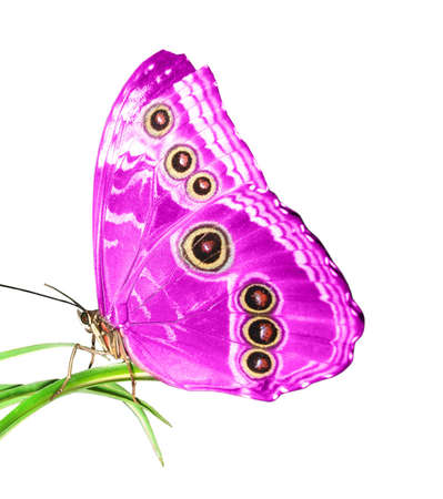 exotic butterflies: beautiful butterfly on a green leaf