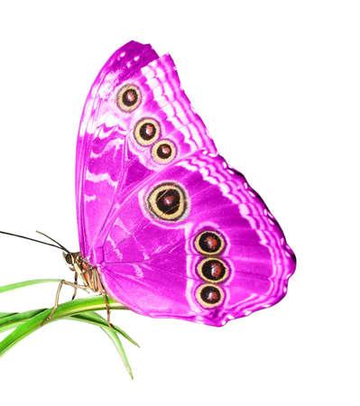 exotic butterflies: hermosa mariposa en una hoja verde Foto de archivo