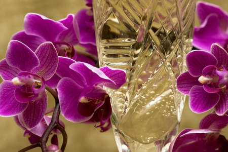 glass with champagne and orchid photo