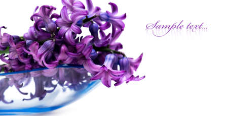 Violet flowers isolated on white background  photo