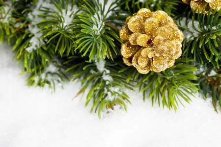 branch of Christmas tree with pinecone photo
