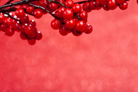 european holly on red background (shallow DOF) Stock Photo - 16786538