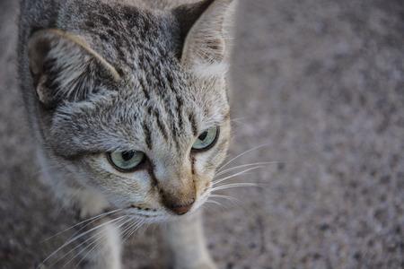 Cat portrait close up. Stock Photo