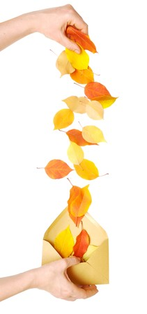 autumn leaves falling from hand into the envelope photo