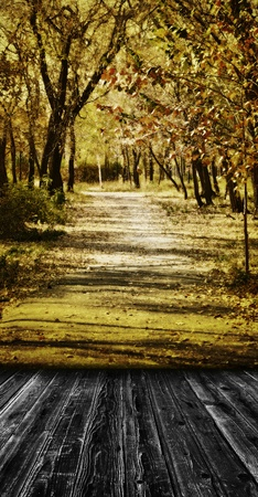 Vintage scenic view colorful autumn pathway in the park  with wooden floor in room style  photo