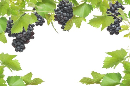 Fresh grapevine frame with black grapes, isolated on white background  Stock Photo