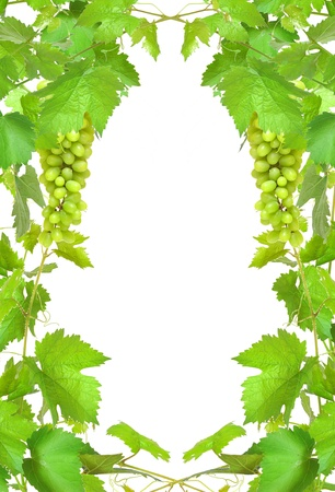 Border of fresh grapevine with ripe grapes  photo