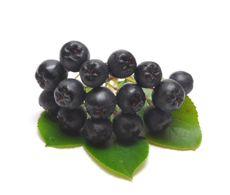 zwarte appelbes. Aronia melanocarpa Stockfoto