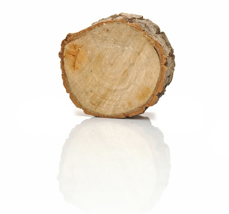 trunk: Tocón de un árbol aislado en fondo blanco