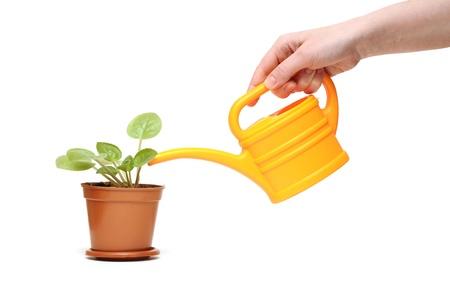 Plan rapproché de la main d'arroser une plante avec arrosage jaune peut Banque d'images