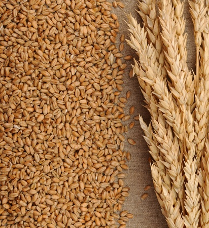 Wheat on sacking background  photo