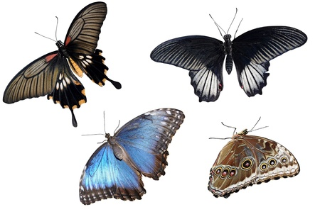 Collection of colorful butterflies isolated on white  photo