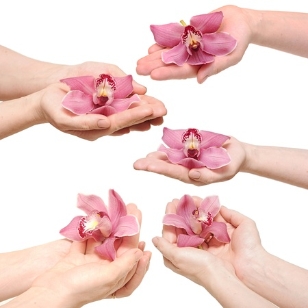 laque: Hands and orchid over isolated white background.each one is a separate picture Stock Photo