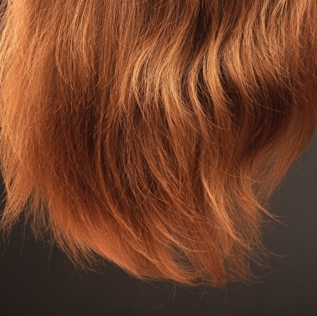 Wheat-colored long straight hair on black background Stock Photo - 15387440
