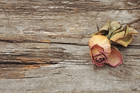 Dry rose on old wood background with copy space photo