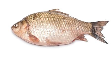 Crucian carp fish isolated on white background Stock Photo - 19712893