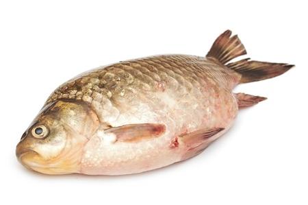 Crucian carp isolated on white background Stock Photo - 19712920