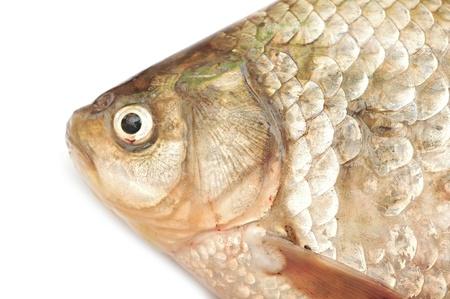 Crucian carp isolated on white background Stock Photo - 19713095