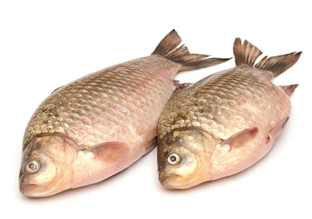 Crucian carp isolated on white background Stock Photo - 19712894