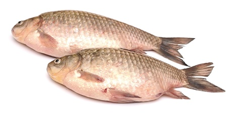 Crucian carp fish isolated on white background  Stock Photo - 19712922