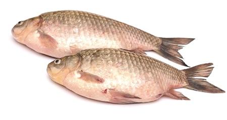 Crucian carp fish isolated on white background Stock Photo - 19712922