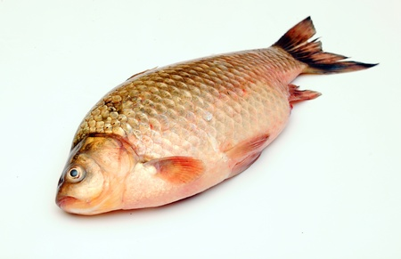 Crucian carp isolated on white background Stock Photo - 19712918