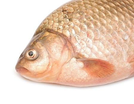 head carp  Stock Photo - 19712896