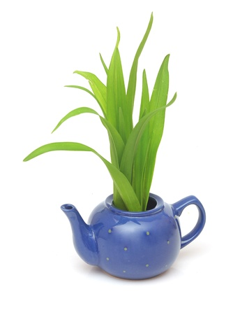 Green grass in teapot isolated on white photo