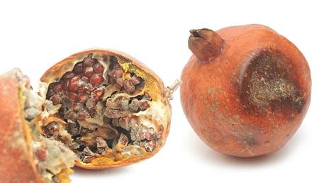 rotten pomegranate on white photo