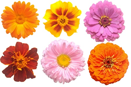 Set of blooming variety flowers  photo