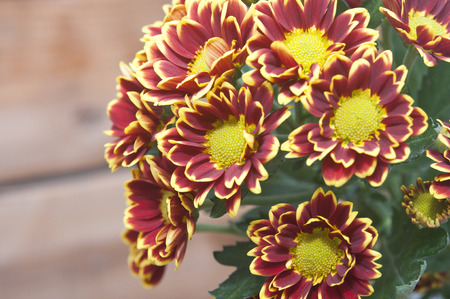 Bouquet of beautiful chrysanthemums on table close-up  photo