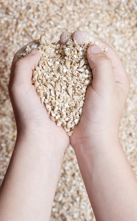 childs hands holding milled grain photo