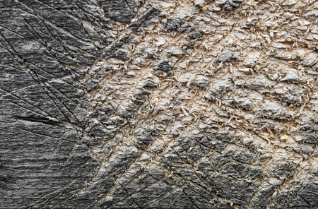 scored: shabby cut tree trunk scored surface texture background Stock Photo