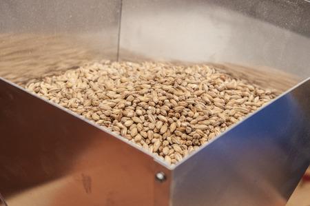 麦芽、マクロ