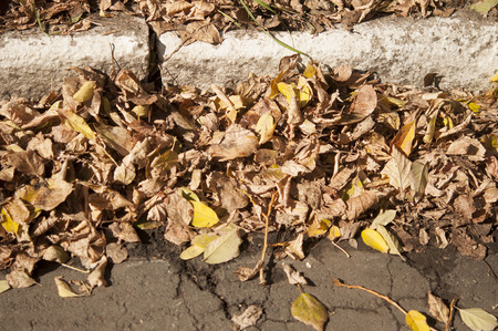 autumn leafs: Close up of Autumn Leafs