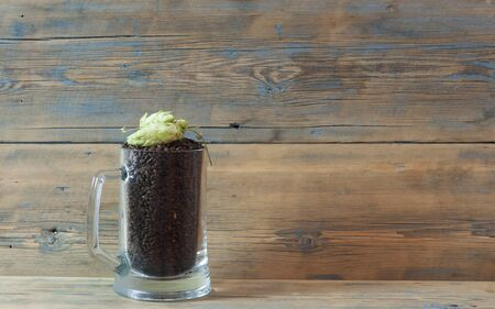 Glass mug with green hops and malts on wooden background