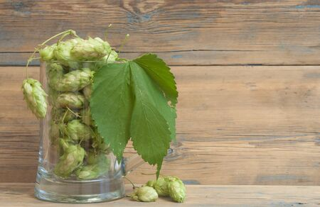 Glass mug with green hops on wooden background