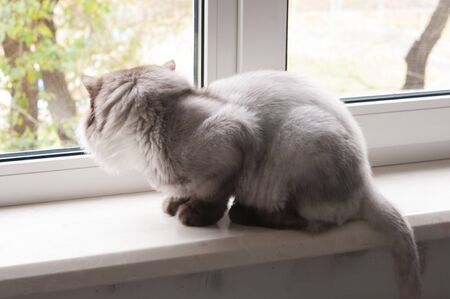 The gray cat sits on a window sill and looks around herself 스톡 콘텐츠 - 132078781