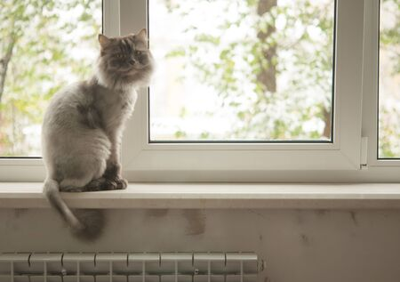 The gray cat sits on a window sill and looks around herself