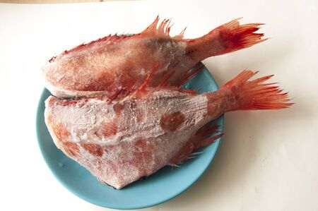 Whole raw organic fish sea perch on blue dish.Top view with copy space.