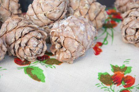 Siberian Cedar pine cones with nuts Standard-Bild
