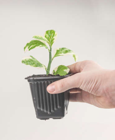 Plant care concept. Child hands are planting houseplant. Spring time. Potted plants.