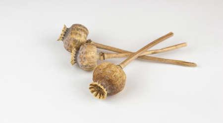 Three dried poppy heads on white Foto de archivo