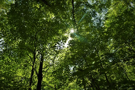 Forest Canopy Imagens