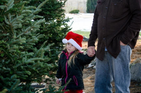 child in santa hat with parent choosing a tree  maybe not this one  photo
