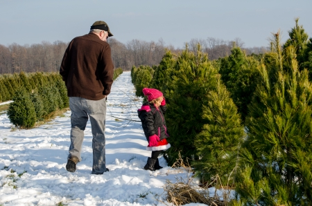 man and child looking for the best Christmas tree photo